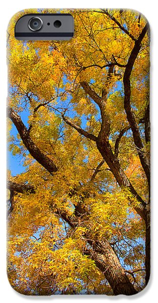 Striking Photography iPhone Cases - Crisp Autumn Day iPhone Case by James BO  Insogna