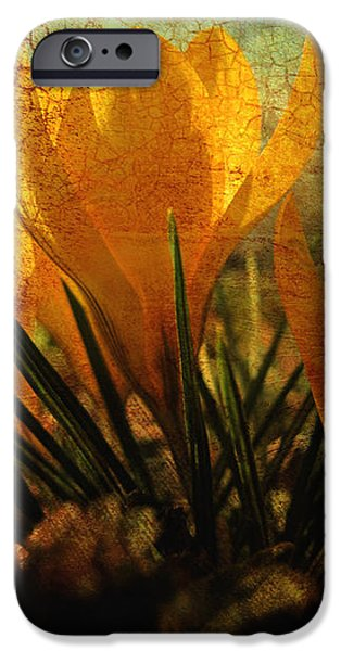 Crocus in Spring Bloom iPhone Case by Ann Powell