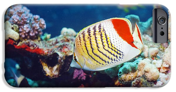 Under Water. Nature iPhone Cases - Crown Butterflyfish iPhone Case by Georgette Douwma