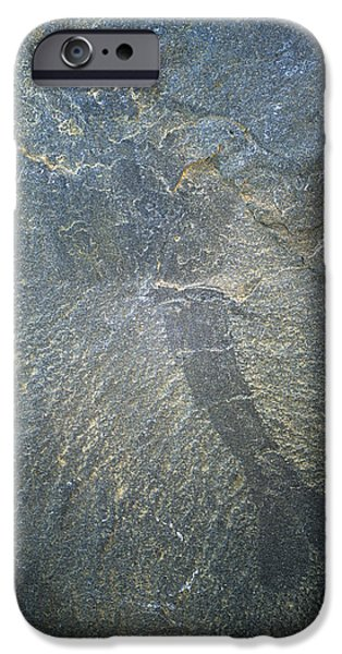 Palaeontology iPhone Cases - Crustacean Fossil iPhone Case by Alan Sirulnikoff