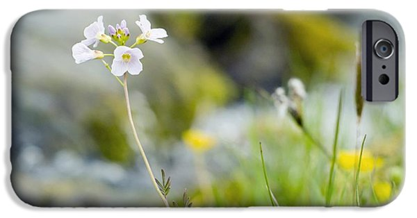 Cuckoo iPhone Cases - Cuckoo Flower (cardamine Pratensis) iPhone Case by Duncan Shaw