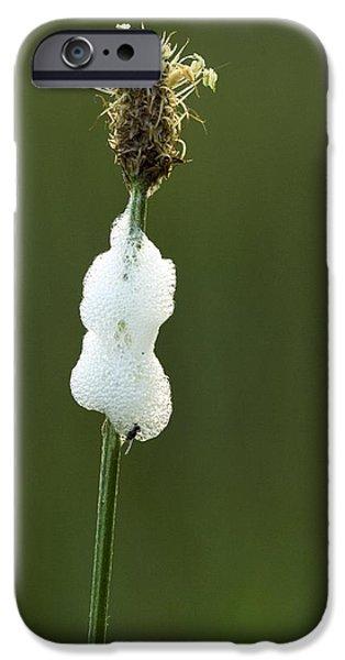 Cuckoo iPhone Cases - Cuckoo Spit (philaenus Spumarius) iPhone Case by Bob Gibbons