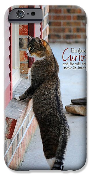 CURIOSITY Inspirational Cat Photograph iPhone Case by Jai Johnson