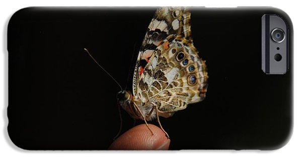 iPhone Cases - Curious Butterfly iPhone Case by Tam Ryan
