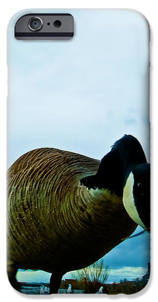 Curious iPhone Case by Joshua Dwyer