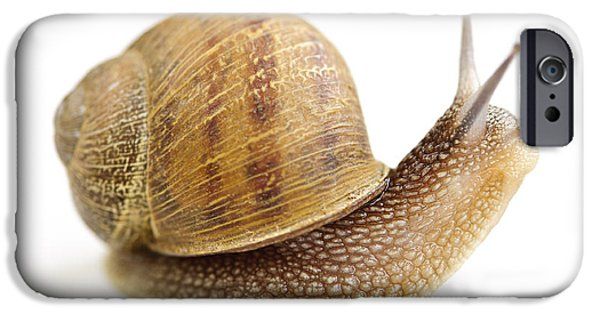 Helix iPhone Cases - Curious snail iPhone Case by Elena Elisseeva
