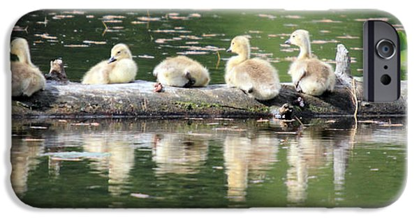 Baby Bird iPhone Cases - Cute Canadian Geese chicks iPhone Case by Pierre Leclerc Photography