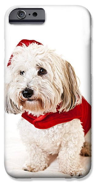 Santa iPhone Cases - Cute dog in Santa outfit iPhone Case by Elena Elisseeva