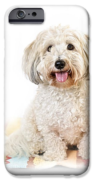 Cute dog portrait iPhone Case by Elena Elisseeva