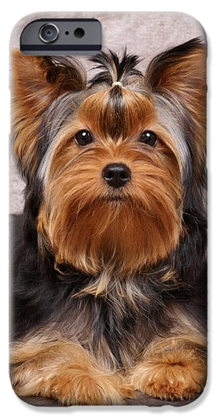 Cute puppy iPhone Case by Konstantin Gushcha