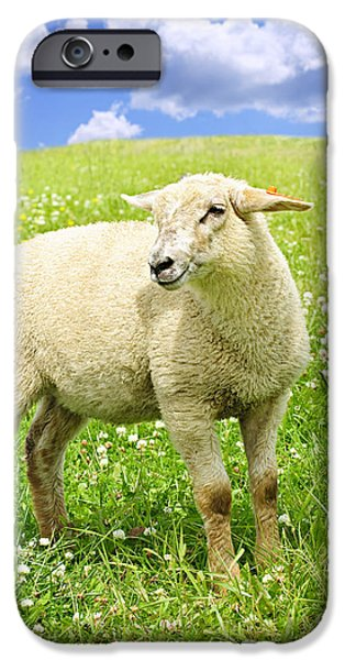 Meadow Photographs iPhone Cases - Cute young sheep iPhone Case by Elena Elisseeva