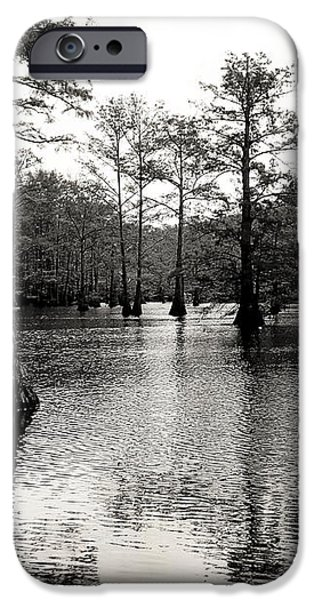 Cypress Trees in Louisiana iPhone Case by Ester  Rogers
