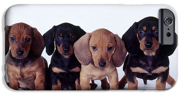 Fauna iPhone Cases - Dachshund Puppies  iPhone Case by Carolyn McKeone and Photo Researchers