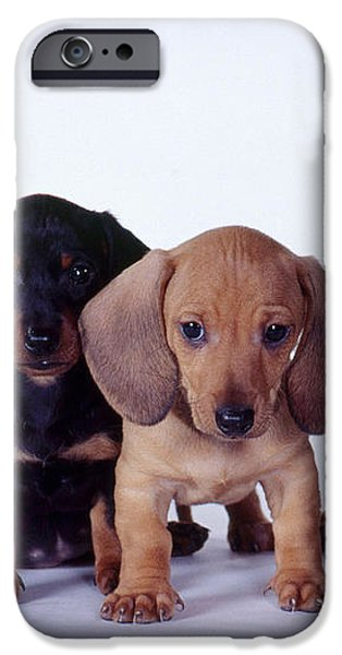 Dachshund Puppies  iPhone Case by Carolyn McKeone and Photo Researchers