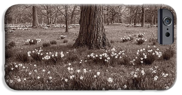 Morton iPhone Cases - Daffodil Glade Number 2 BW iPhone Case by Steve Gadomski