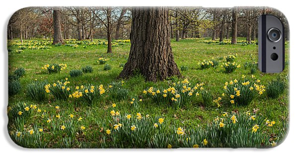 Morton iPhone Cases - Daffodil Glade Number 2 iPhone Case by Steve Gadomski