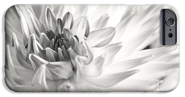 Dahlia iPhone Cases - Dahlia Flower 02 iPhone Case by Nailia Schwarz