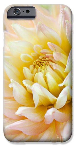 Dahlia iPhone Cases - Dahlia Flower 03 iPhone Case by Nailia Schwarz