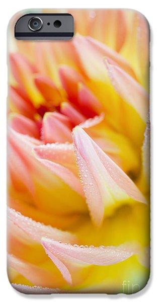 Dahlia iPhone Cases - Dahlia Flower 04 iPhone Case by Nailia Schwarz