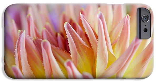 Dahlia iPhone Cases - Dahlia Flower 05 iPhone Case by Nailia Schwarz