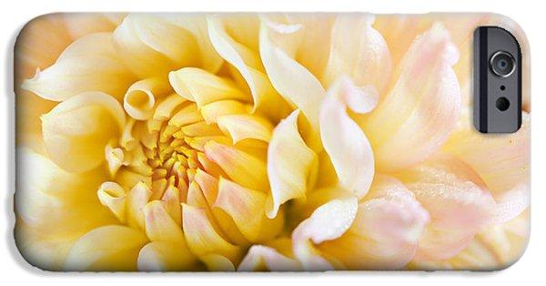 Dahlia iPhone Cases - Dahlia Flower 08 iPhone Case by Nailia Schwarz
