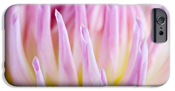 Dahlia iPhone Cases - Dahlia Flower 12 iPhone Case by Nailia Schwarz