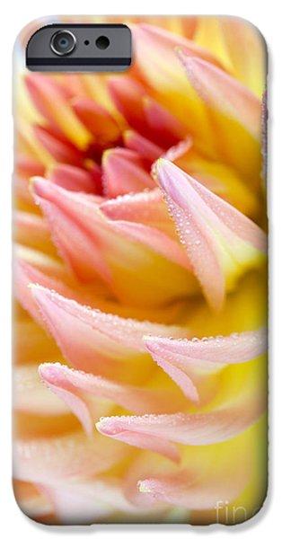 Dahlia iPhone Cases - Dahlia Flower 13 iPhone Case by Nailia Schwarz