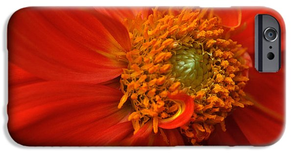 iPhone Cases - Dahlia Persuasion iPhone Case by Kathy Yates