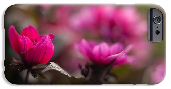 Floral Photographs iPhone Cases - Dahlias Red Dream iPhone Case by Mike Reid