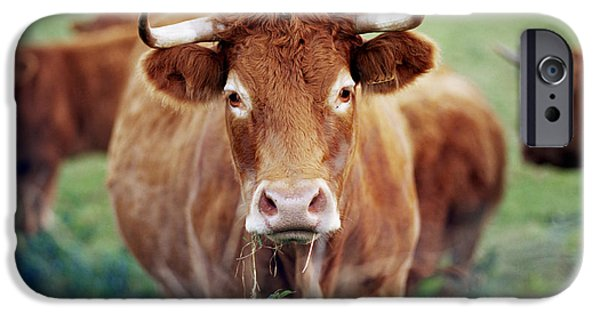 Agricultural iPhone Cases - Dairy Cow iPhone Case by David Munns