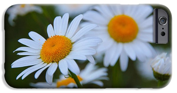 Pen And Ink Photographs iPhone Cases - Daisy iPhone Case by Athena Mckinzie