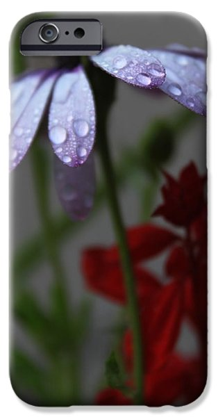 Wet Petals iPhone Cases - Daisy Drops iPhone Case by Lauri Novak