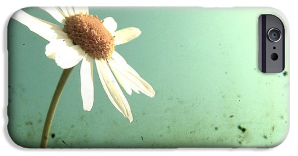 Margaret iPhone Cases - Daisy iPhone Case by Marianna Mills