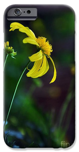 Daisy Bud iPhone Cases - Daisy Profile iPhone Case by Kaye Menner