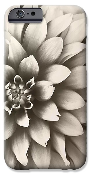 Daliha Dreams iPhone Case by Artist and Photographer Laura Wrede