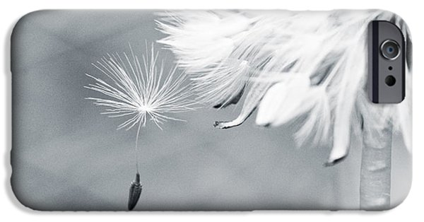 Monotone iPhone Cases - Dandelion Macro Make a Wish iPhone Case by Stephanie McDowell
