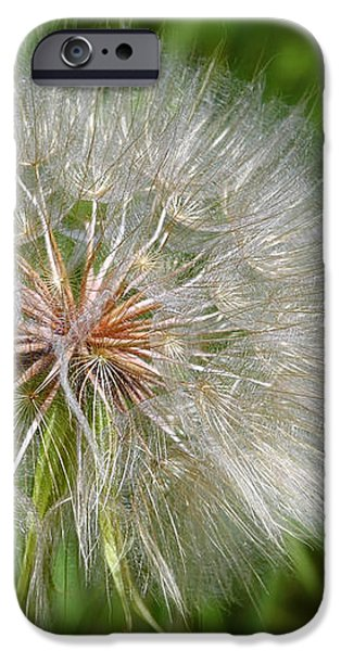 Dandelion Puff - The Summer Queen iPhone Case by Christine Till