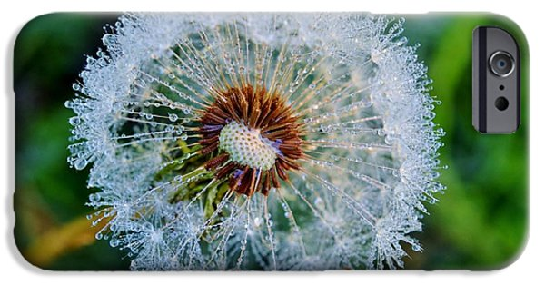 Torn iPhone Cases - Dandelion with dew drops iPhone Case by Werner Lehmann