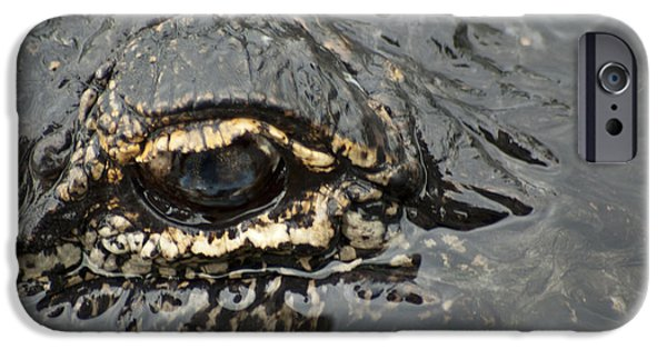 Alligator iPhone Cases - Dangerous Stalker iPhone Case by Carolyn Marshall