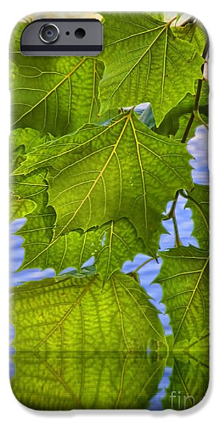 Flooding iPhone Cases - Dangling Leaves iPhone Case by Deborah Benoit