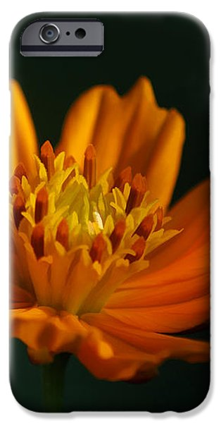 Dappled in the Morning Light iPhone Case by Darren Fisher