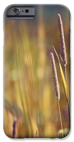 Aimelle Prints iPhone Cases - Day Whisperings iPhone Case by Aimelle