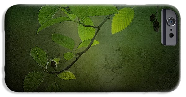 Nature Study iPhone Cases - Daybreak Tiptoes In iPhone Case by Bonnie Bruno