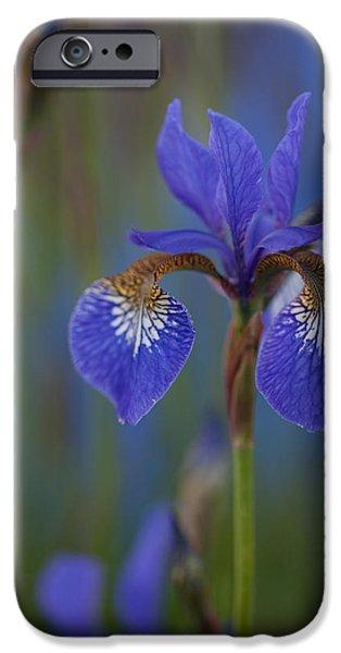 Iris iPhone Cases - Decorated Iris iPhone Case by Mike Reid