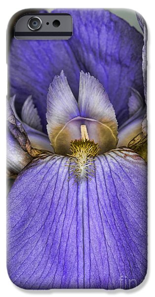 Purple Sensation iPhone Cases - Deep Purple iPhone Case by Paul Ward