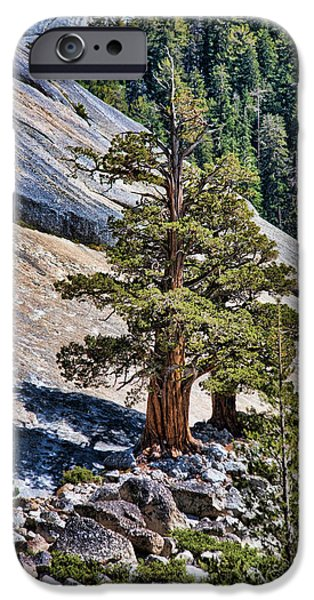 Tree Roots iPhone Cases - Deep Roots iPhone Case by Bonnie Bruno