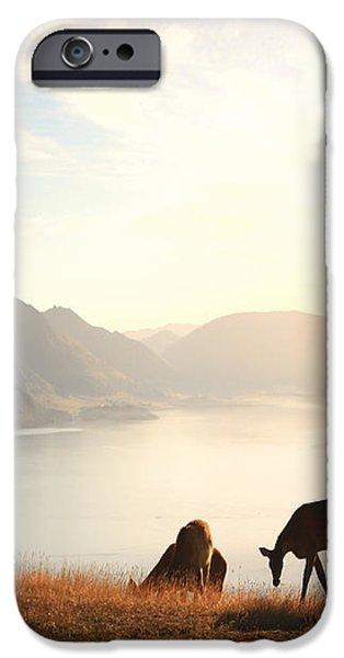 Deer at sunset iPhone Case by Pixel  Chimp
