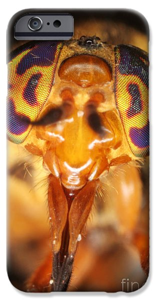 Deerfly iPhone Case by Ted Kinsman