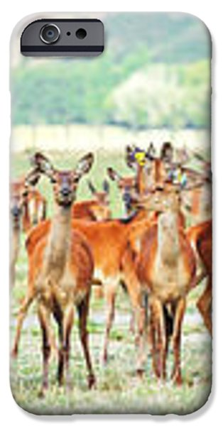 Deers iPhone Case by MotHaiBaPhoto Prints