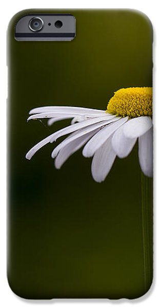 Defiant Daisy iPhone Case by Clare Bambers